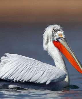 Vogelgebied Karavasta