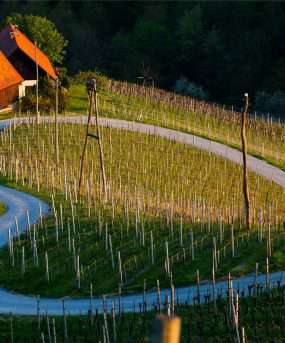 Wijnbouw Slovenië