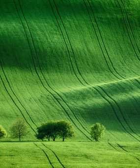 Zonnige glooiende heuvels met velden en bomen - tsjechie